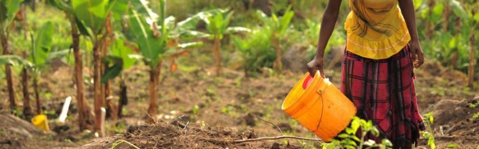 Primera evaluación global de los suelos y sus cambios en el Día Mundial del Suelo