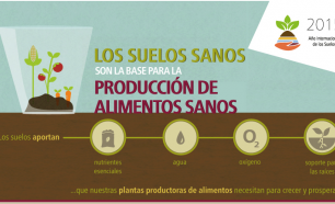 Los suelos sanos son la base para la producción de alimentos saludables